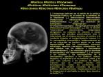 FERNANDO ANTONIO RUANO FAXAS. IMAGOLOGÍA, PAISOLOGÍA, POLÍTICA, POLÍTICOS, ELECCIONES. Neurociencia, Neuroscience, Нейронаука. Neuropolítica, Neuropolitics,Нейрополитика